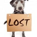 lost-pets-lp