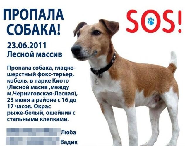 Второй этап: объявления о пропаже собаки