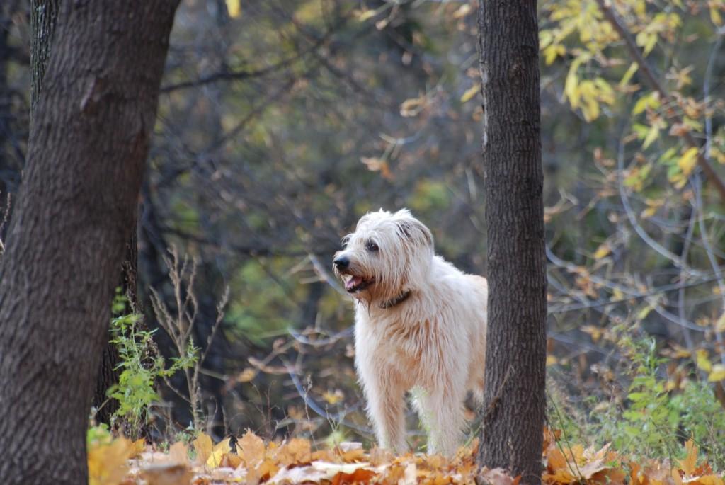 Где размещать объявления о пропаже собаки?