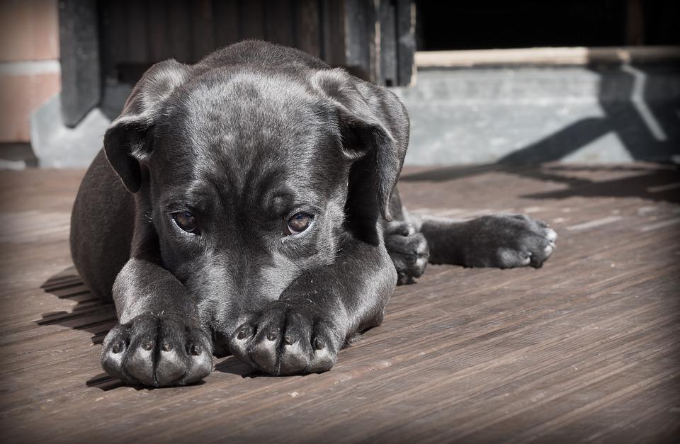 Поиск собаки по горячим следам